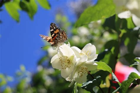 Designing the Perfect Butterfly Garden - Concord Tree
