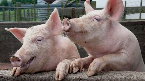 French entrepreneurs launch test to detect pork in food