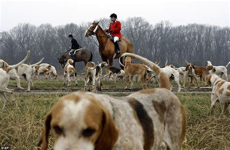 160 foxhunting clubs still exist in US and Canada | Daily